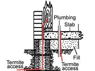 termite-entry2
