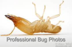 Professional Bug Photography from Alexander Wild